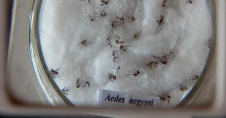 FMT estudas vacina contra dengue