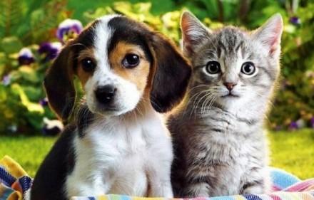Você sabe, quais os direitos do seu animal de estimação?