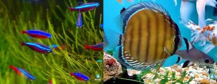 No Defeso, aumenta a fiscalização da pesca de peixes ornamentais