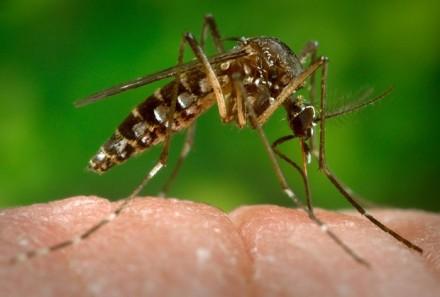 A guerra mundial contra o Aedes, está declarada
