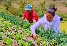 A agricultura familiar, terá mais de R$