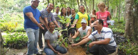 Na semana do meio ambiente, serão plantadas 400 mil mudas de árvores em Manaus