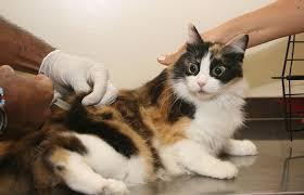 ... Gatos, devem ser imunizados