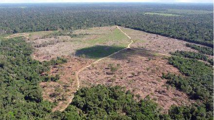 O Pará, continua na liderança do desmatamento na Amazonia