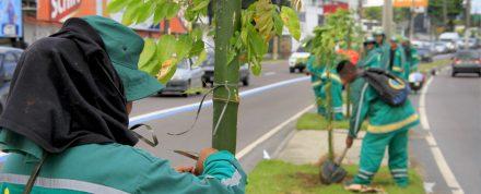 Mudas de árvores começam a ser plantadas na Av. Torquato Tapajós
